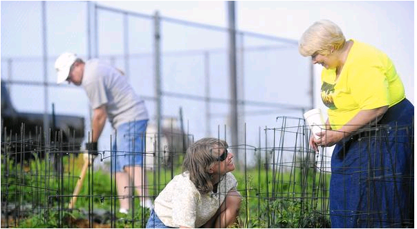 Volunteers adopt a plot in our community garden in Westminster and tend to it all season long.